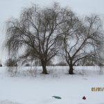 Kansas Winter Trees